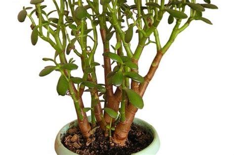 Plantas resistentes para el interior de tu casa