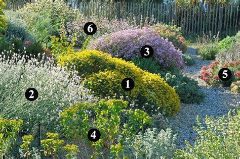 Plantas rústicas y resistentes a la sequía  II   con ...