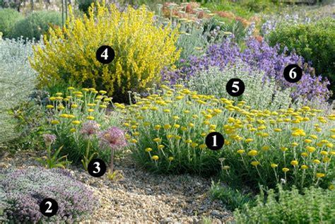 Plantas rústicas y resistentes a la sequía para un jardín ...