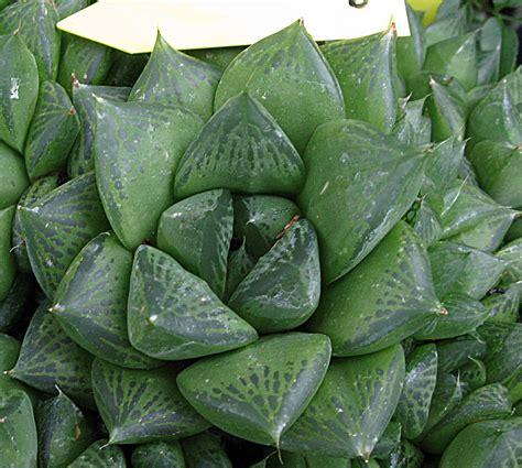 Plantas Suculentas | Plantas suculentas, Suculentas ...