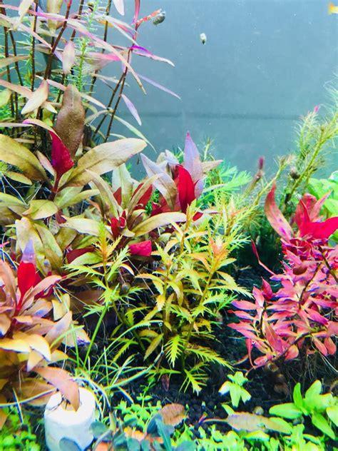 Plantas Tropicales Acuario Naturales   $ 2.000 en Mercado ...