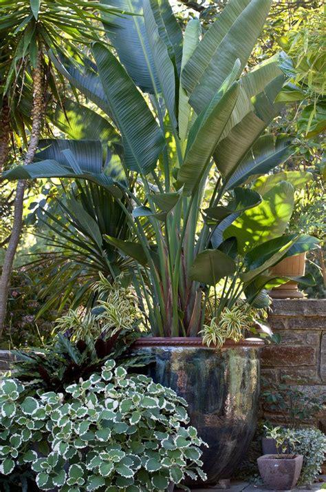 Plantas Tropicales Para Jardin Exterior   Novocom.top