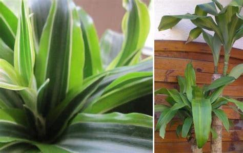 Plantas Verdes De Interior Nombres   SEONegativo.com
