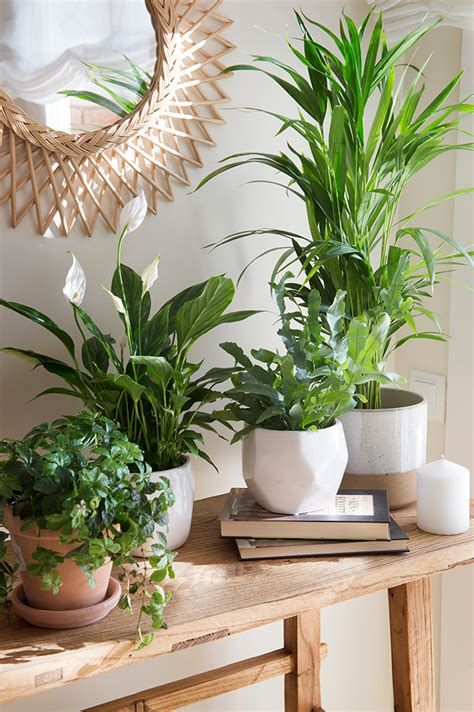 Plantas y Feng shui, la mejor manera de llenar de energía ...
