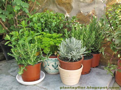 Plantas y flores: Aromáticas en casa