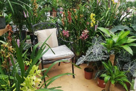 Plantas y flores: Plantas para terraza