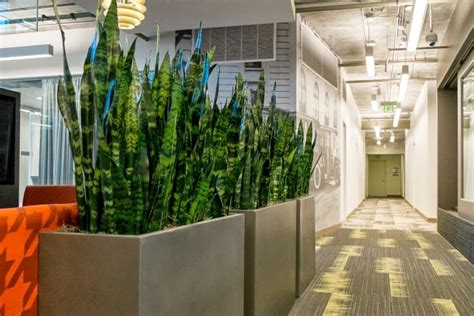 planters | Room with plants, Office plants, Indoor plants
