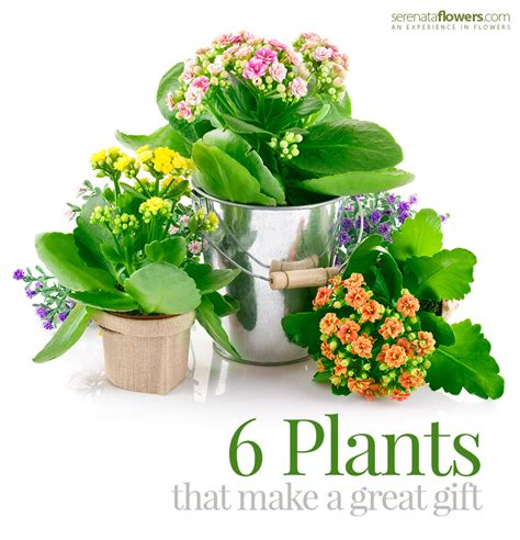 Plants as Gifts: 6 Plants that are Awesome Gifts – Pollen ...