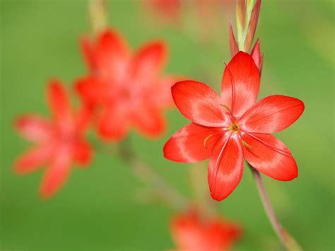 Plants That Flower in Winter | HGTV