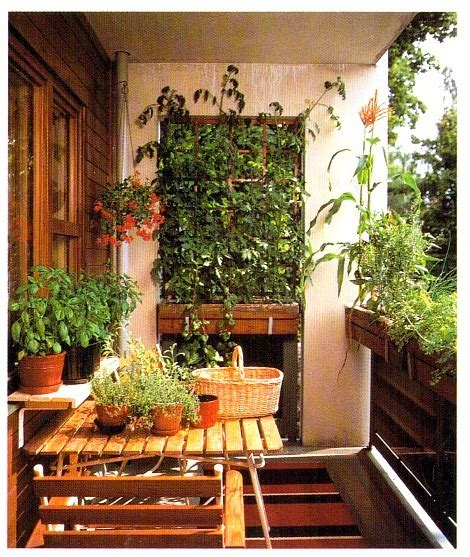 Plants To Grow On Balconies