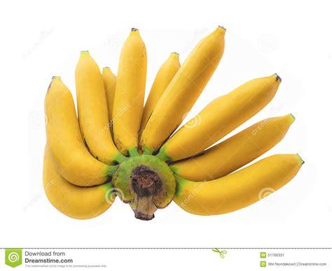 Plátano de Cavendish imagen de archivo. Imagen de alimento ...