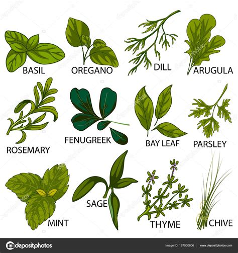 Pmages: fresh herbs | Different variety of fresh Herbs ...