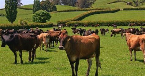 PNUD promueve la ganadería sustentable en todo México ...