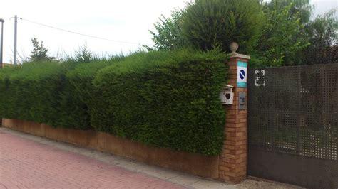 Podar ciprés de valla   Reus  Tarragona    Habitissimo