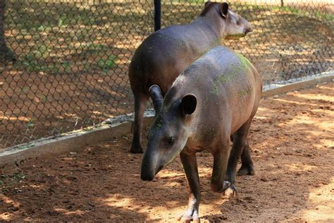 Police believe thieves steal Venezuela zoo animals to eat ...