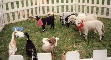 Pony rides and petting zoo rentals for children s birthday ...