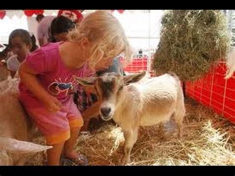 Pony Rides Petting Zoo Rental Orange County Kids Birthday ...