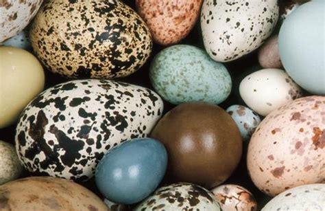 ¿Por qué algunos dinosaurios ponían huevos de colores?