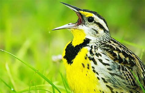 Por qué cantan los pájaros – Sooluciona