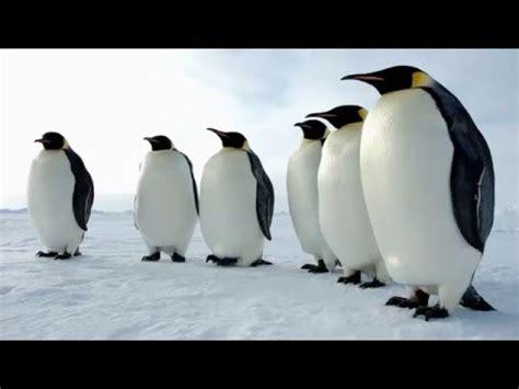 ¿Por qué hay aves que no vuelan?   YouTube