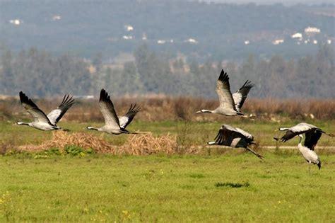 ¿Por qué las aves migran a nuestra comarca? | Miajadas   Hoy
