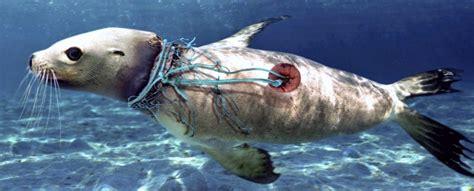 Por qué los animales marinos se extinguirán antes que las ...