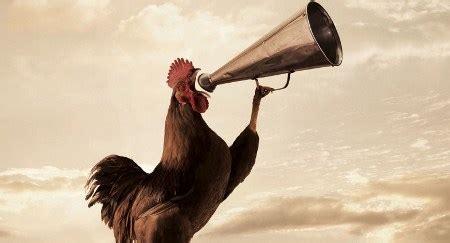 ¿Por qué los gallos cantan al alba? | HISPANTV