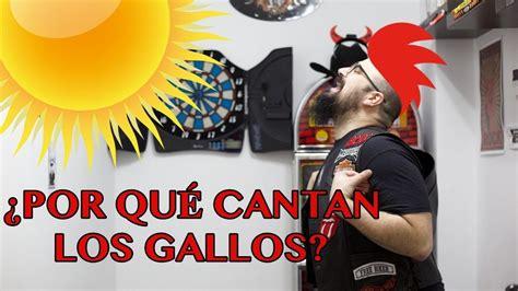 ¿POR QUE LOS GALLOS CANTAN AL SALIR EL SOL?   YouTube