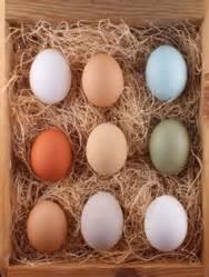 Por qué los huevos de gallina son de diferentes colores ...