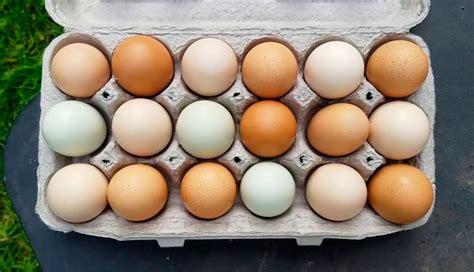 Por qué los huevos son de colores diferentes   Radio Mitre