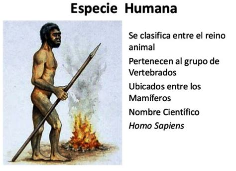 ¿Por qué los humanos pertenecemos al reino animal?   Reino ...
