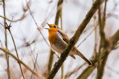 ¿Por qué los pájaros cantan al amanecer? Los científicos ...