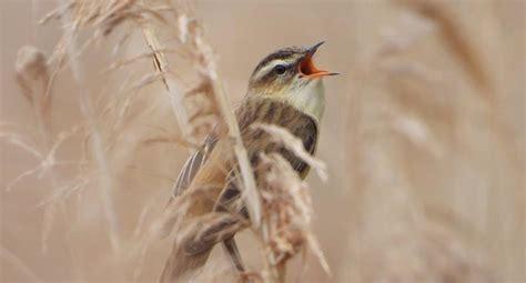 ¿Por qué los pájaros cantan distinto según el lugar donde ...