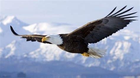 ¿Por qué los pájaros pueden volar?   Porque.es
