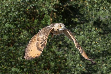¿Por qué migran las aves en invierno? – Noticias Earthgonomic