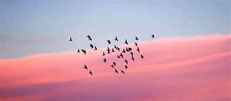 ¿Por qué migran las aves? | Blog Xochitla