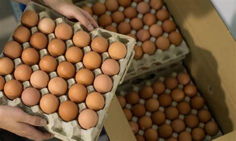 Por qué sigue subiendo el precio del huevo – InfoAgro