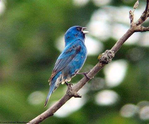 ¿Por qué suena más fuerte el canto de los pájaros al ...