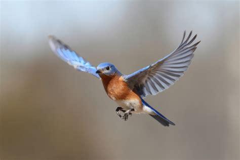 ¿Por qué vuelan las aves?   VIX