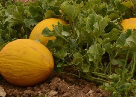 Por una agricultura ecológica en Castilla La Mancha ...