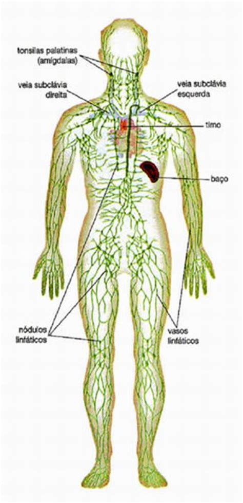 Portal do Professor   Defesas de nosso organismo: Sistema ...
