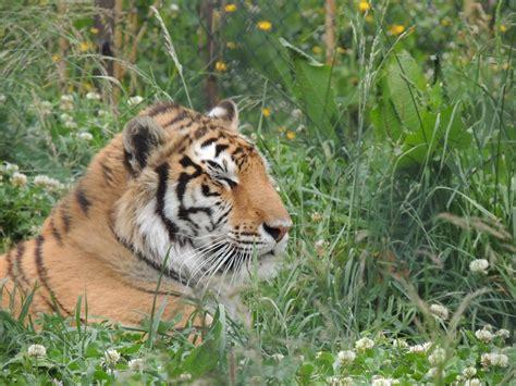 Portugal 2013: Zoo da Maia  Porto