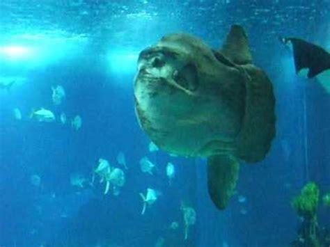 portugal Lisbonne Expo aquarium  Gros Poisson lune   YouTube