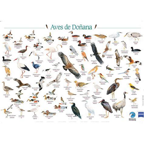 Póster Aves de Doñana. Tienda SEO/BirdLife ¡Contagiamos ...