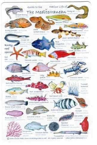 Póster Peces del Mar Mediterráneo | Peixiños | Peces de ...