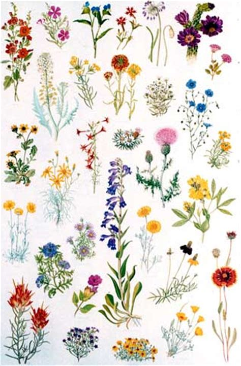 Posters – Native Plant Society of New Mexico