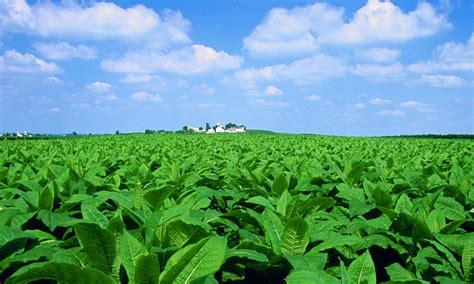 Potencializar la fotosíntesis en plantas podría ser la ...