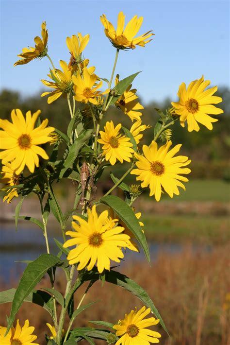 Powell Gardens  Blog: Garden Serenity