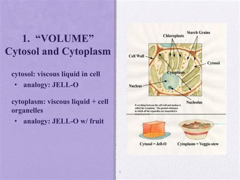 """PPT   1. """"VOLUME"""" Cytosol and Cytoplasm PowerPoint ..."""