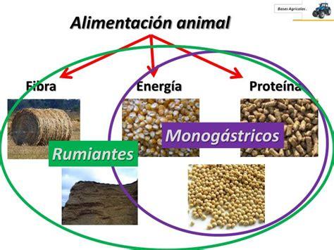 PPT   Alimentación animal PowerPoint Presentation, free ...